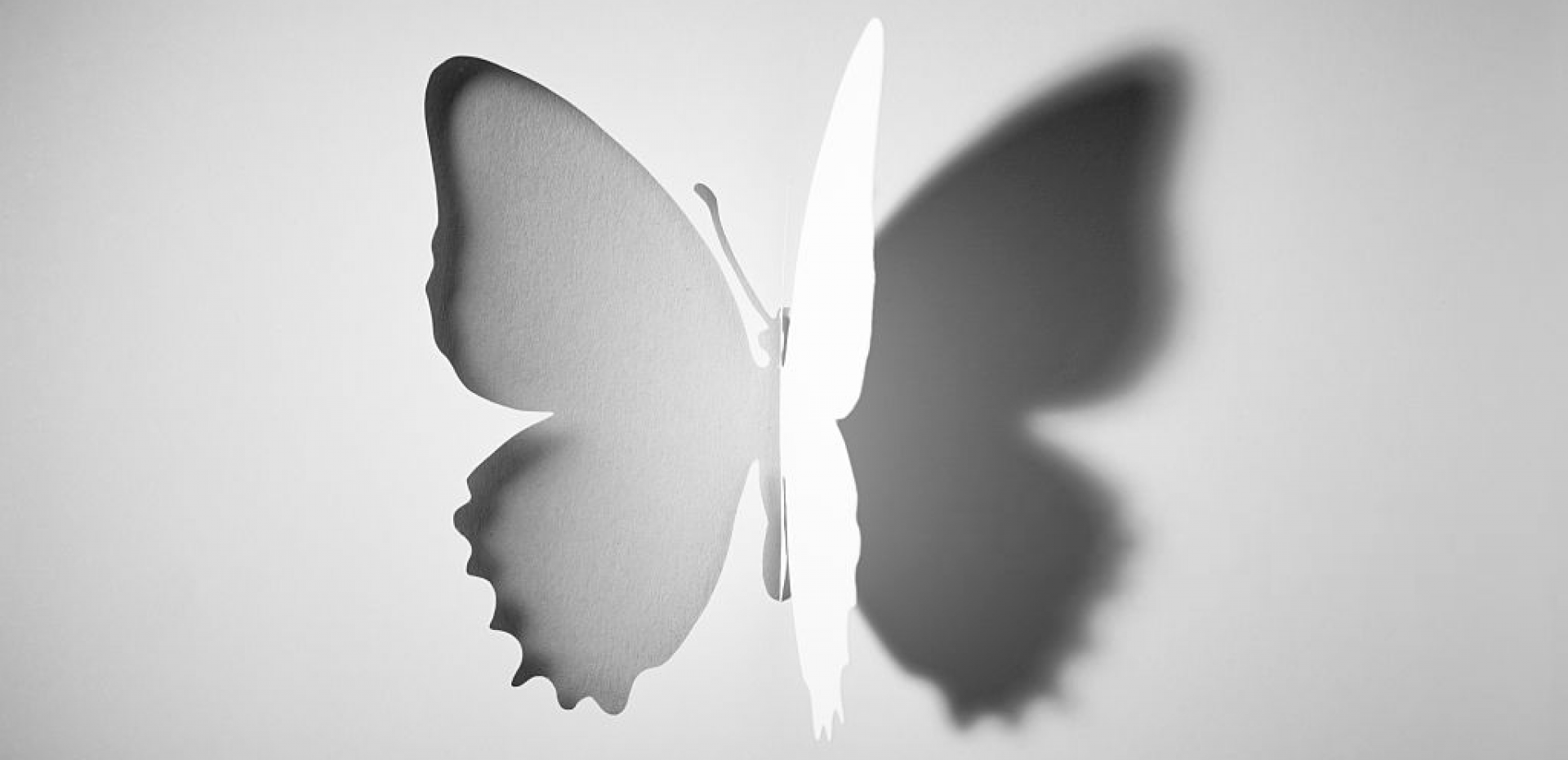 https://www.toyacreatives.com/wp-content/uploads/2019/10/cropped-butterfly.png