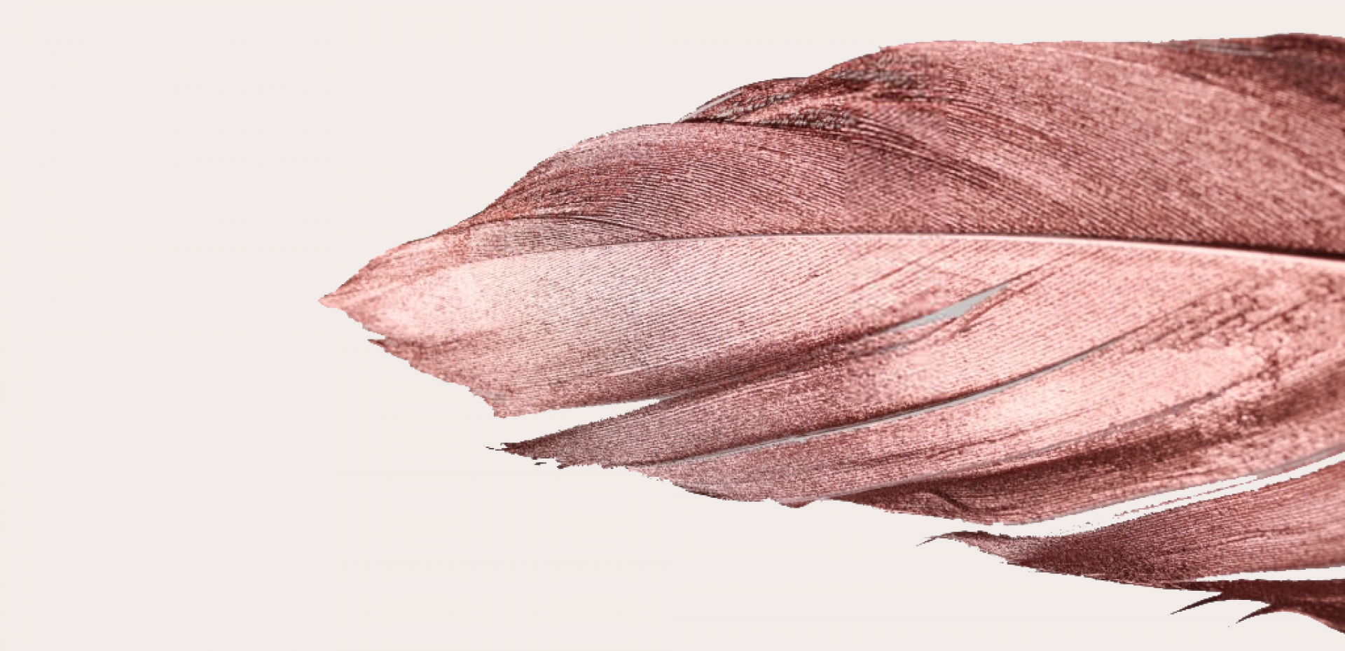 https://www.toyacreatives.com/wp-content/uploads/2019/10/cropped-feather-copy-1.png